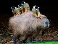 Как подчиненные перекладывают ответственность на руководителя. У кого на плече обезьяна?
