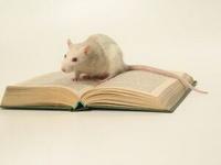 Мир когнетивной крысы
