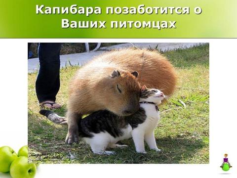 Капибара позаботится о Ваших питомцах