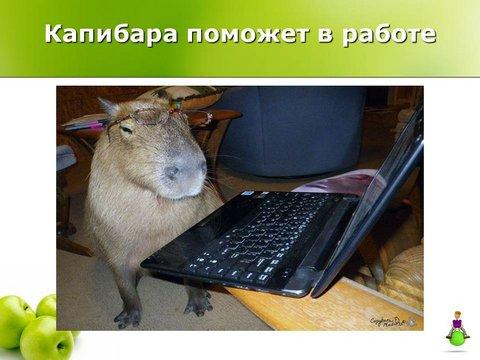 Капибара поможет в работе