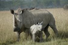 Время белых носорогов. Как я пришел к управлению продажами. Армия. Часть 2