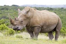 Время белых носорогов.  После армии. Часть 3