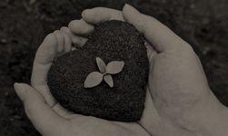 Как сделать продажи экологичными(видео)