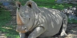 Время белых носорогов. Трудоустройство. Часть 4