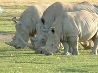 Время белых носорогов. Как я пришел к управлению продажами. Юность. Часть 1